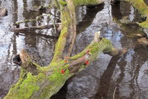 River Oughton