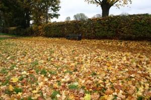 autumnal scene